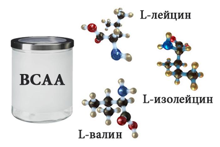 что такое аминокислоты ВССА